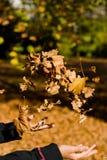 Fogli di lancio di autunno Immagini Stock