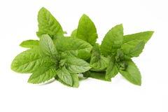 Fogli di menta fresca verdi su bianco Fotografia Stock Libera da Diritti