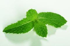 Fogli di menta verdi freschi su priorità bassa bianca Fotografia Stock