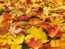 Fogli di novembre - autunno Fotografia Stock Libera da Diritti