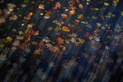 Fogli di ottobre Fotografie Stock
