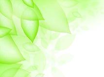 Fogli di verde Immagini Stock