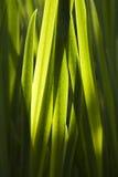 Fogli di verde Immagine Stock Libera da Diritti
