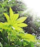 Fogli di verde con la rugiada di mattina Fotografia Stock Libera da Diritti