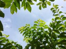 Fogli di verde contro il cielo Immagini Stock