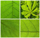 Fogli di verde dell'accumulazione Immagine Stock