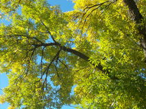 Fogli di verde e del cielo blu Fotografia Stock