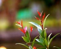Fogli di verde e di colore rosso Immagine Stock Libera da Diritti