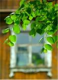 Fogli di verde e finestra della casa di campagna Fotografia Stock Libera da Diritti