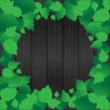 Fogli di verde e legno freschi, blocco per grafici Immagine Stock