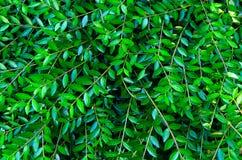 fogli di verde il verde lascia la struttura della priorità bassa Disposizione creativa fatta delle foglie verdi Disposizione pian Fotografia Stock Libera da Diritti