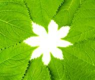 Fogli di verde nella figura del fiore Fotografie Stock Libere da Diritti