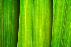 Fogli di verde, primo piano Fotografia Stock