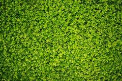 Fogli di verde - struttura Immagini Stock Libere da Diritti