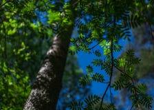 Fogli di verde su cielo blu immagine stock libera da diritti