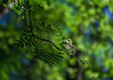Fogli di verde su cielo blu immagini stock