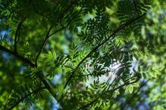 Fogli di verde su cielo blu fotografia stock libera da diritti