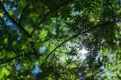 Fogli di verde su cielo blu immagini stock libere da diritti