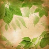Fogli di verde su un documento dell'annata fotografia stock