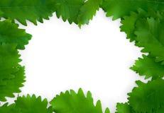 Fogli di verde sulla priorità bassa di carta del blocco per grafici isolata Fotografia Stock