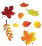 Fogli di vettore di autunno Fotografie Stock