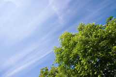 Fogli e cielo blu di verde Fotografie Stock
