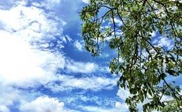 Fogli e cielo dell'albero Fotografie Stock