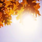 Fogli e cielo di autunno Immagine Stock