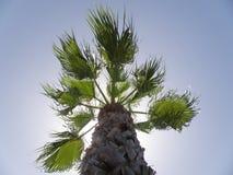 Fogli e Cloudscape della palma Immagini Stock Libere da Diritti