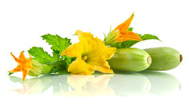Fogli e fiore verdi dello zucchini Immagine Stock