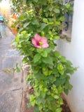 Fogli e fiori Fotografia Stock