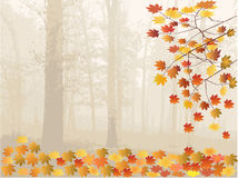 Fogli e foresta di autunno Fotografia Stock