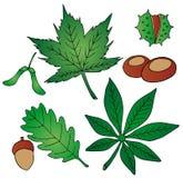 Fogli e frutta Illustrazione Vettoriale