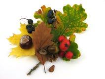 Fogli e frutta dell'autunno Fotografia Stock
