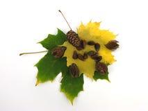 Fogli e frutta dell'autunno Immagine Stock Libera da Diritti