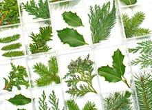 Fogli e piante di verde Fotografia Stock Libera da Diritti