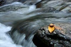 Fogli e roccia Fotografia Stock