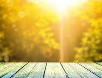 Fogli e sole di verde Immagini Stock Libere da Diritti