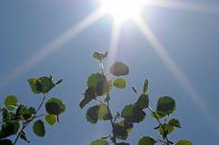 Fogli e sole di verde fotografia stock
