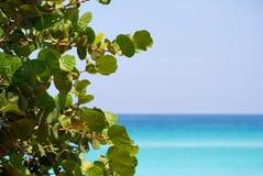 Fogli e una bella spiaggia Immagini Stock Libere da Diritti