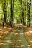 Fogli ed alberi di autunno Immagini Stock Libere da Diritti