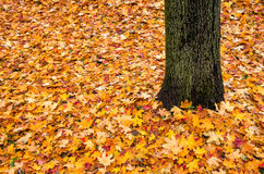 Fogli ed albero di autunno Fotografia Stock Libera da Diritti