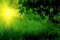Fogli ed erba sotto il sole luminoso Fotografie Stock Libere da Diritti
