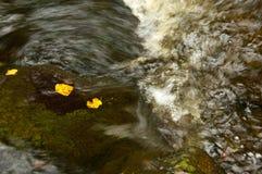 Fogli in flusso 8170 Fotografia Stock