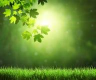 Fogli in foresta immagini stock libere da diritti