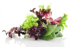 Fogli freschi dell'insalata Immagini Stock