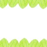 Fogli freschi di verde su priorità bassa bianca Fotografia Stock