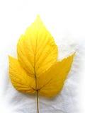 Fogli gialli Fotografie Stock