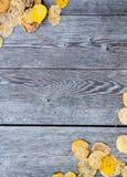 Fogli gialli di caduta Fotografie Stock Libere da Diritti