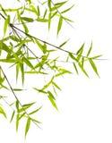 Fogli giapponesi del bambù Immagini Stock